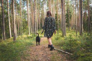 hund skov